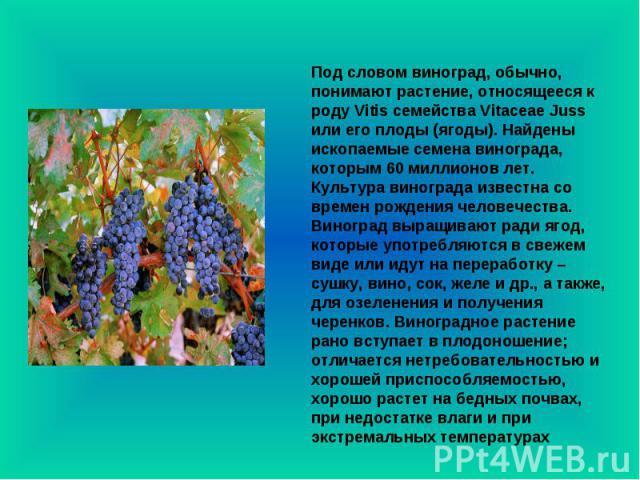 Под словом виноград, обычно, понимают растение, относящееся к роду Vitis семейства Vitaceae Juss или его плоды (ягоды). Найдены ископаемые семена винограда, которым 60 миллионов лет. Культура винограда известна со времен рождения человечества. Виног…