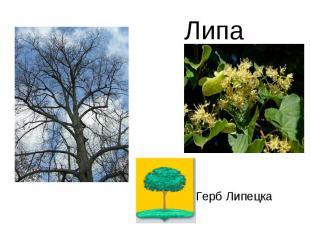 ЛипаГерб Липецка