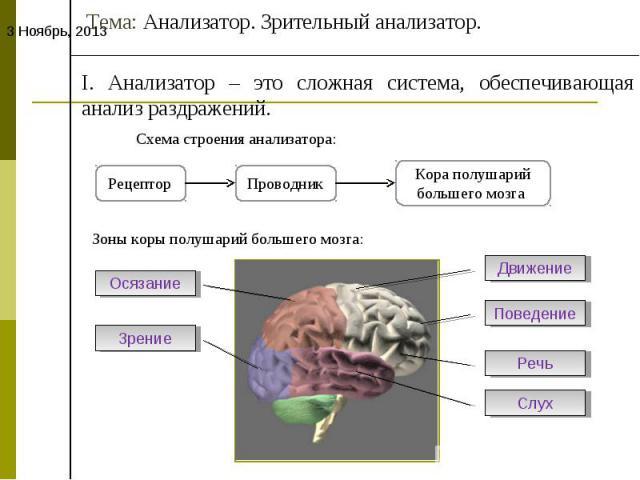 Тема: Анализатор. Зрительный анализатор.I. Анализатор – это сложная система, обеспечивающая анализ раздражений.Схема строения анализатора:Зоны коры полушарий большего мозга: