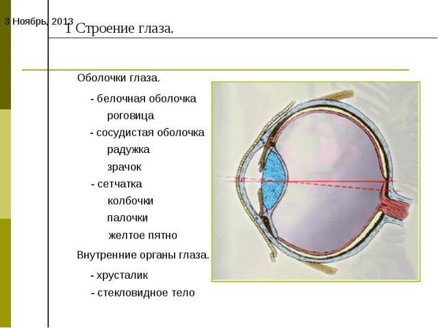 1 Строение глаза.Оболочки глаза.- белочная оболочка роговица- сосудистая оболочка радужка зрачок- сетчаткаколбочкипалочкижелтое пятноВнутренние органы глаза.- хрусталик- стекловидное тело