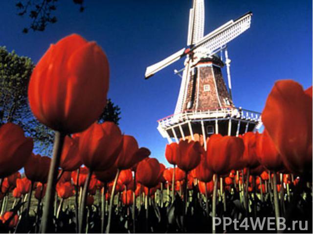 Одним из символов Нидерландов считаются, конечно же, ветряные мельницы