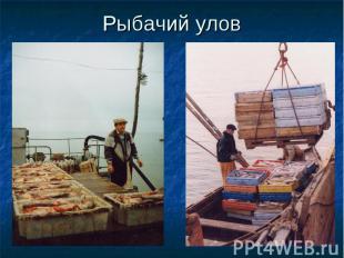 Рыбачий улов