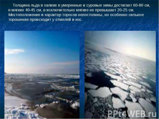 Толщина льда в заливе в умеренные и суровые зимы достигает 60-80 см, в мягкие 40-45 см, в исключительно мягкие не превышает 20-25 см. Местоположение и характер торосов непостоянны, но особенно сильное торошение происходит у отмелей и кос.