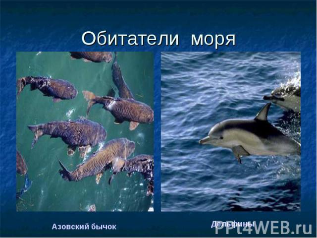 Обитатели моря Азовский бычокДельфины