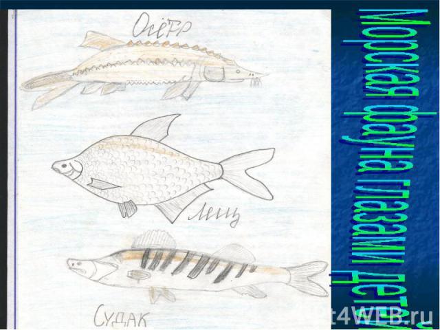 Морская фауна глазами детей