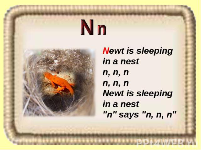 Newt is sleeping in a nest n, n, n n, n, n Newt is sleeping in a nest