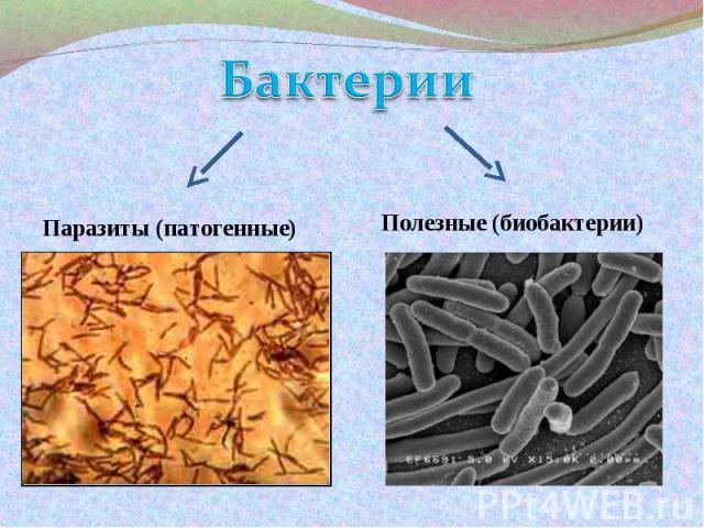БактерииПаразиты (патогенные)Полезные (биобактерии)