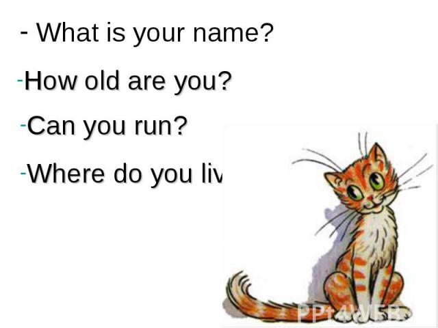 What is your name? How old are you?Can you run?Where do you live?