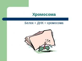 Хромосома Белок + ДНК = хромосома
