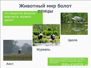 Животный мир болотптицы Что общего во внешнем виде аиста, журавля, цапли? (Длинн