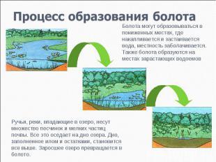 Процесс образования болота Болота могут образовываться в пониженных местах, где