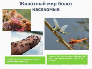 Животный мир болотнасекомые На болотах много насекомых: КОМАРЫ, МОШКИ.Ими питают