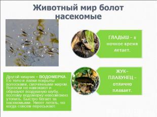 Животный мир болотнасекомые ГЛАДЫШ – в ночное время летает.ЖУК-ПЛАВУНЕЦ – отличн