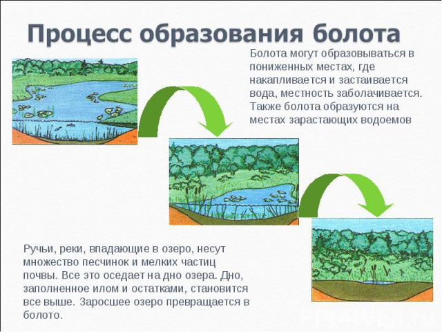 Процесс образования болота Болота могут образовываться в пониженных местах, где накапливается и застаивается вода, местность заболачивается. Также болота образуются на местах зарастающих водоемовРучьи, реки, впадающие в озеро, несут множество песчин…