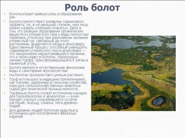 Роль болот Болота играют важную роль в образовании рек.Болота препятствуют развитию парникового эффекта. Их, в не меньшей степени, чем леса, можно назвать «лёгкими планеты». Дело в том, что реакция образования органических веществ из углекислого газ…