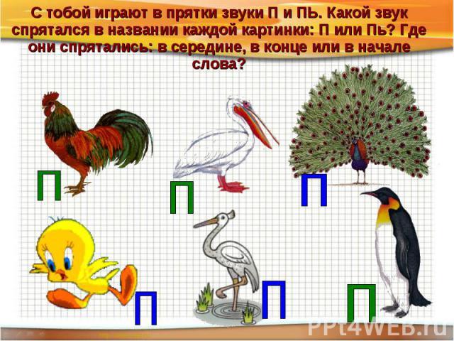 С тобой играют в прятки звуки П и ПЬ. Какой звук спрятался в названии каждой картинки: П или Пь? Где они спрятались: в середине, в конце или в начале слова?