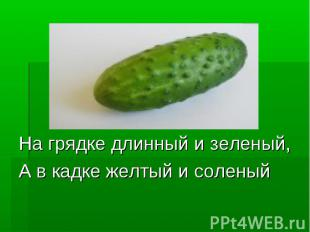 На грядке длинный и зеленый,А в кадке желтый и соленый