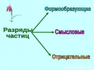Разряды частицФормообразующиеСмысловыеОтрицательные