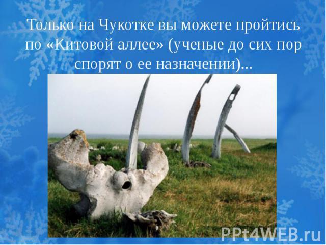 Только на Чукотке вы можете пройтись по «Китовой аллее» (ученые до сих пор спорят о ее назначении)...