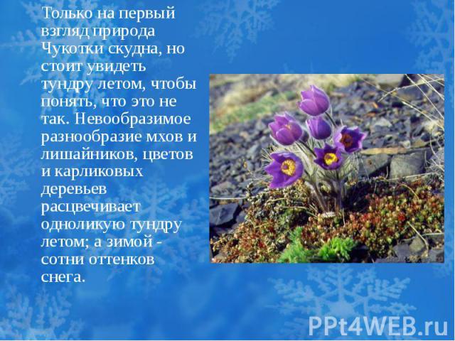 Только на первый взгляд природа Чукотки скудна, но стоит увидеть тундру летом, чтобы понять, что это не так. Невообразимое разнообразие мхов и лишайников, цветов и карликовых деревьев расцвечивает одноликую тундру летом; а зимой - сотни оттенков снега.