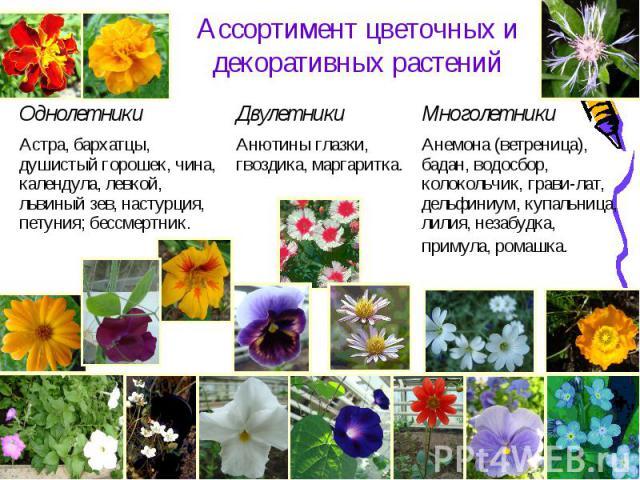 Ассортимент цветочных и декоративных растений