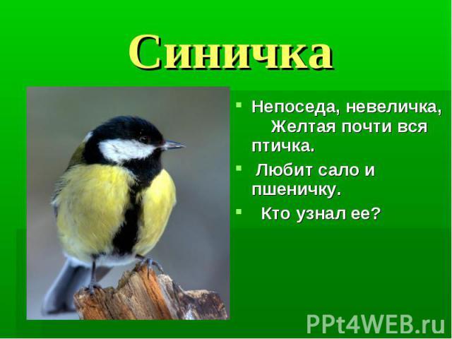 Синичка Непоседа, невеличка, Желтая почти вся птичка. Любит сало и пшеничку. Кто узнал ее?