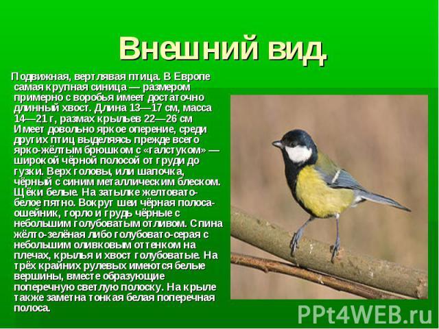 Внешний вид. Подвижная, вертлявая птица. В Европе самая крупная синица— размером примерно с воробья имеет достаточно длинный хвост. Длина 13—17см, масса 14—21 г, размах крыльев 22—26см Имеет довольно яркое оперение, среди других птиц выделяясь пр…