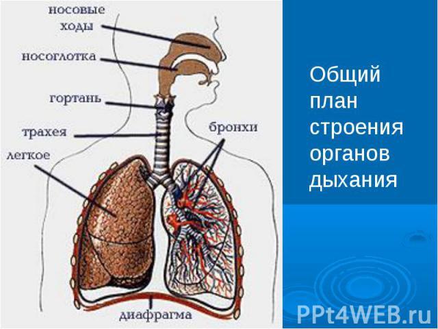Увлажнение поступающего в организм воздуха начинается в