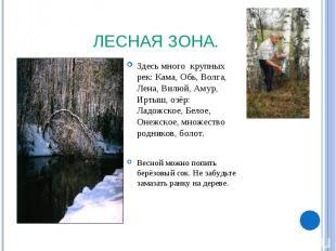 Лесная зона. Здесь много крупных рек: Кама, Обь, Волга, Лена, Вилюй, Амур, Иртыш