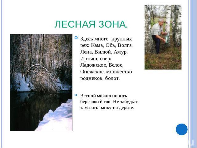 Лесная зона. Здесь много крупных рек: Кама, Обь, Волга, Лена, Вилюй, Амур, Иртыш, озёр: Ладожское, Белое, Онежское, множество родников, болот. Весной можно попить берёзовый сок. Не забудьте замазать ранку на дереве.