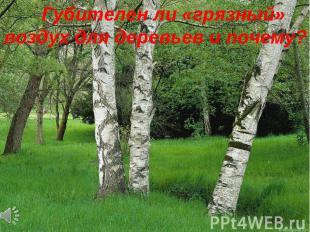 Губителен ли «грязный» воздух для деревьев и почему?
