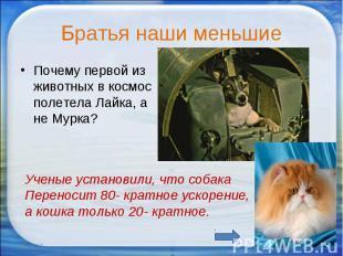 Братья наши меньшие Почему первой из животных в космос полетела Лайка, а не Мурк