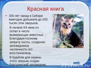 Красная книга 300 лет назад в Сибири ежегодно добывали до 200 тысяч этих зверько