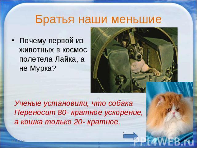 Братья наши меньшие Почему первой из животных в космос полетела Лайка, а не Мурка?Ученые установили, что собака Переносит 80- кратное ускорение, а кошка только 20- кратное.