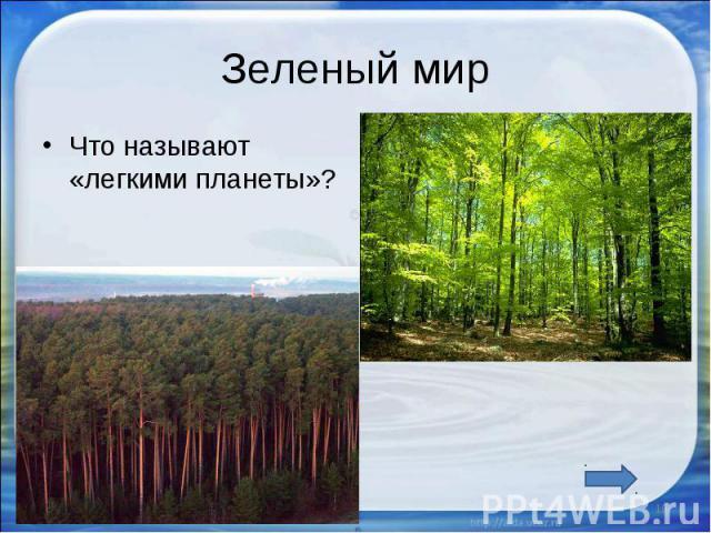 Зеленый мир Что называют «легкими планеты»?