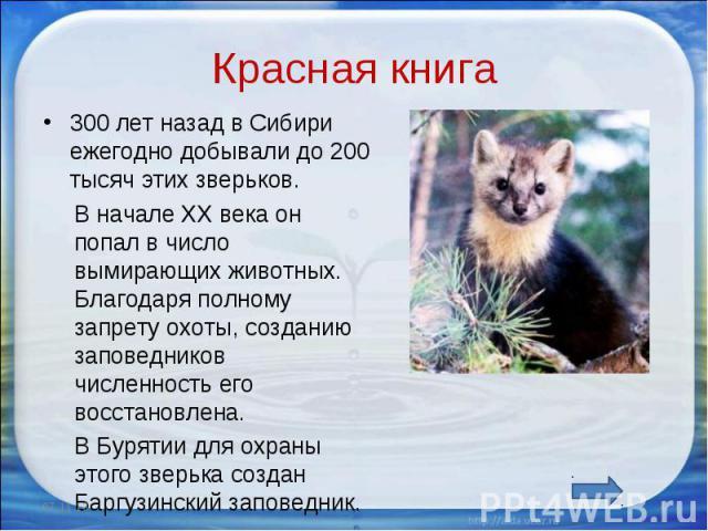 Красная книга 300 лет назад в Сибири ежегодно добывали до 200 тысяч этих зверьков. В начале ХХ века он попал в число вымирающих животных. Благодаря полному запрету охоты, созданию заповедников численность его восстановлена. В Бурятии для охраны этог…