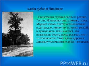 Аллея дубов в Диканьке Таинственна глубина лесов на родине Гоголя. И невелики он