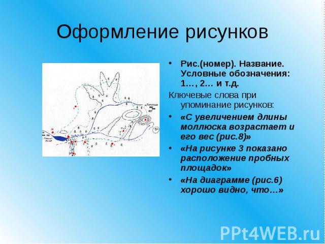 Оформление рисунков Рис.(номер). Название. Условные обозначения: 1…, 2… и т.д. Ключевые слова при упоминание рисунков:«С увеличением длины моллюска возрастает и его вес (рис.8)»«На рисунке 3 показано расположение пробных площадок»«На диаграмме (рис.…