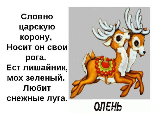 Словно царскую корону, Носит он свои рога. Ест лишайник, мох зеленый. Любит снежные луга.