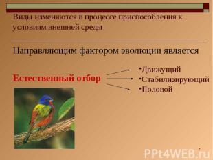 Виды изменяются в процессе приспособления к условиям внешней среды Направляющим