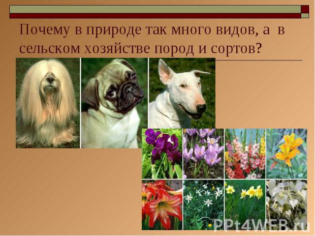 Почему в природе так много видов, а в сельском хозяйстве пород и сортов?