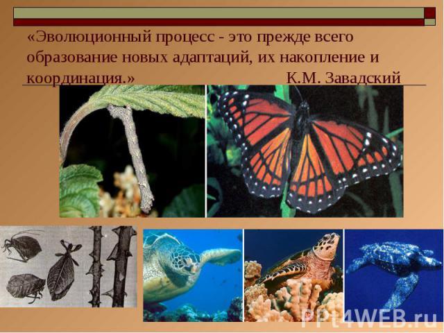 «Эволюционный процесс - это прежде всего образование новых адаптаций, их накопление и координация.» К.М. Завадский