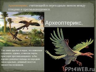 Археоптерикс, считающийся переходным звеном между птицами и пресмыкающимися.Архе