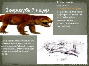 Зверозубый ящер Реконструкция вымершего зверозубого ящера. Зубы этих ящеров были