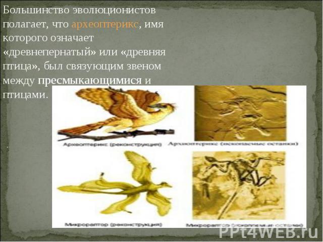 Большинство эволюционистов полагает, что археоптерикс, имя которого означает «древнепернатый» или «древняя птица», был связующим звеном между пресмыкающимися и птицами.