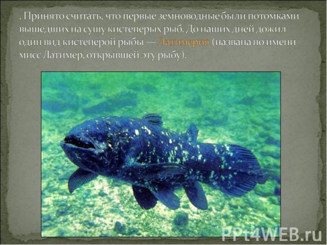 . Принято считать, что первые земноводные были потомками вышедших на сушу кистеперых рыб. До наших дней дожил один вид кистеперой рыбы — Латимерия (названа по имени мисс Латимер, открывшей эту рыбу).