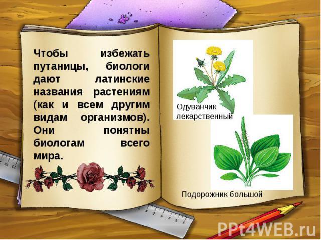 Чтобы избежать путаницы, биологи дают латинские названия растениям (как и всем другим видам организмов). Они понятны биологам всего мира.