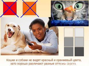 Кошки и собаки не видят красный и оранжевый цвета, зато хорошо различают разные