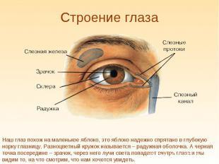 Строение глаза Наш глаз похож на маленькое яблоко, это яблоко надежно спрятано в