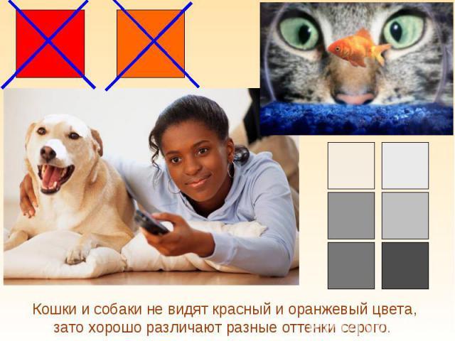 Кошки и собаки не видят красный и оранжевый цвета, зато хорошо различают разные оттенки серого.